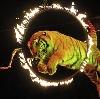 Цирки в Пестяках